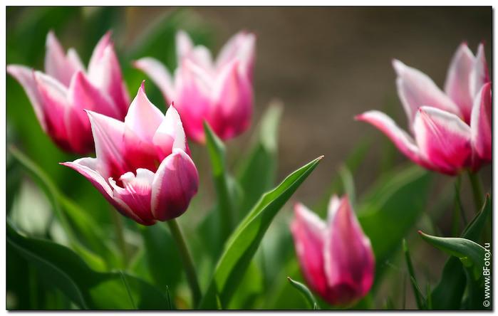 отруйн квтков рослини конспект уроку