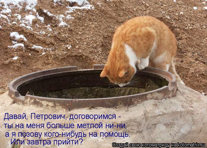 http://img1.liveinternet.ru/images/attach/c/2/73/160/73160321_06_kotomatrix.jpg