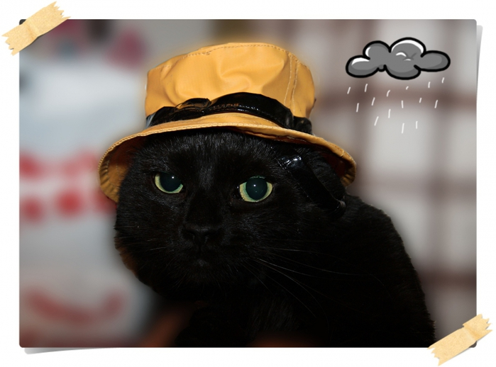 тоскующий кот фото