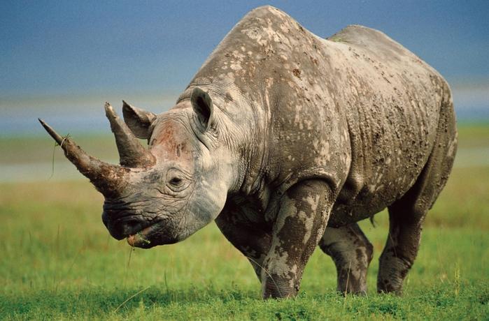 10 самых больших животных в мире.
