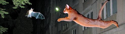 Падение кошек  загадки природы  статьи  чудесаcom