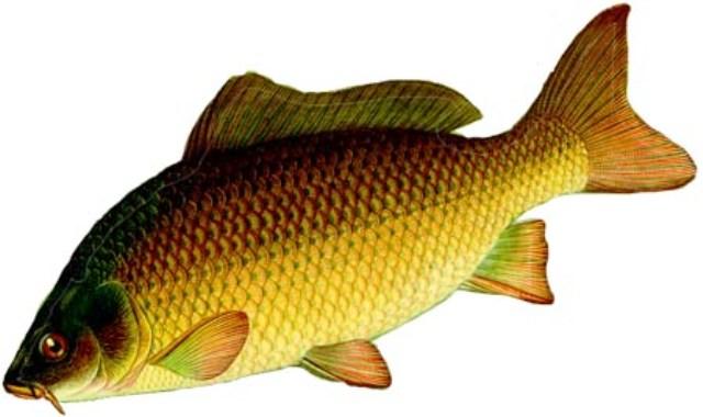 Очень мелкую рыбу можно не чистить ,лишь убрать жабры и выпотрошить.