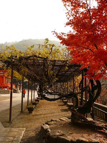 Киёмидзу-дэра - храм для всех. 61791