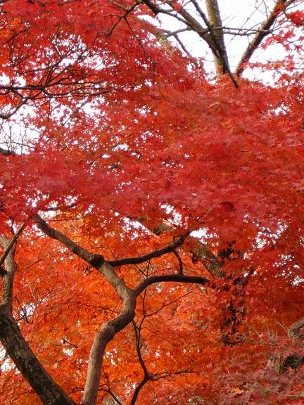 Киёмидзу-дэра - храм для всех. 99028