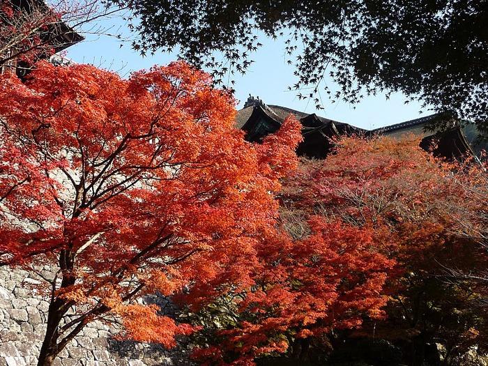 Киёмидзу-дэра - храм для всех. 97317