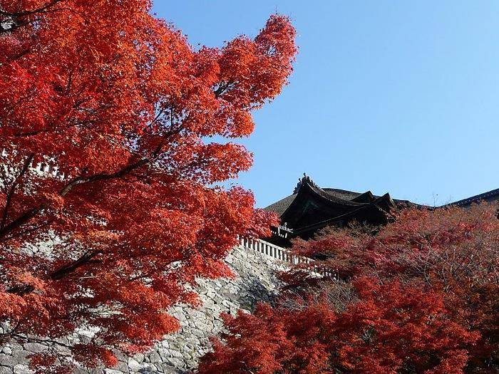 Киёмидзу-дэра - храм для всех. 79910