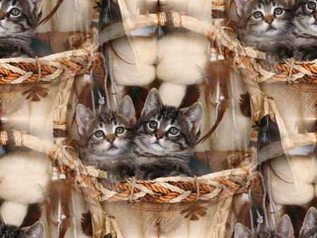 Animals_Cats__004293_ (450x338, 82Kb)