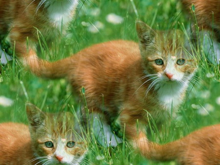 Animals_Cats__004296_ (450x338, 67Kb)
