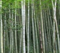 bambuk2 (200x176, 33Kb)