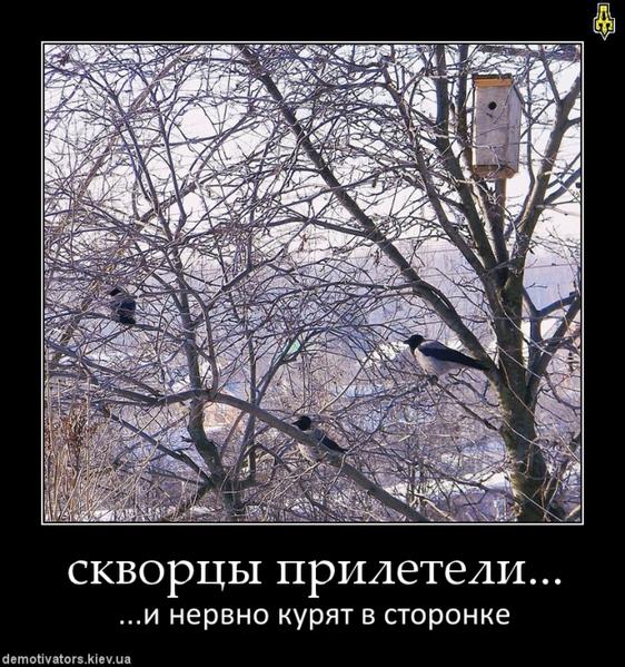 http://img1.liveinternet.ru/images/attach/c/2/73/264/73264049_4344169_mail__yars__lb.jpg