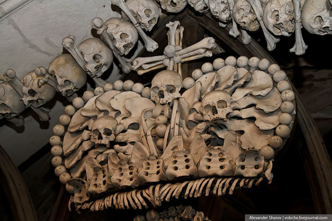 Скелет человека картинки с подписями 5