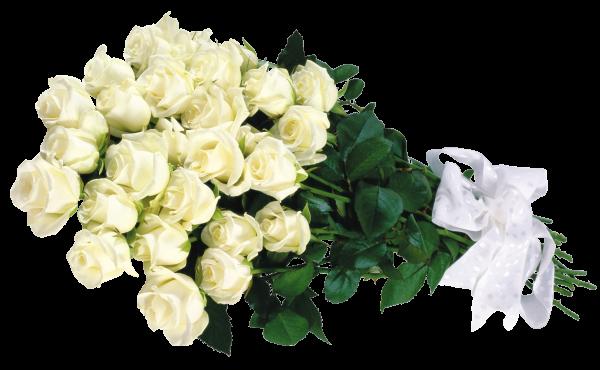 белые розы  23 шт. (600x370, 336Kb)