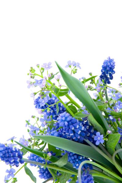 4597spring_flowers91876 (399x600, 113Kb)