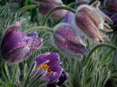 весна цветы (378x280, 25Kb)