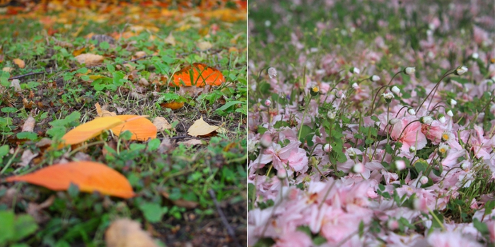 4278666_5187728867_d14158de07_Fall_and_spring_colours_L (700x349, 226Kb)