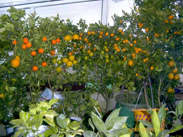 1868538_greenhouse_n(1) (640x480, 57Kb)