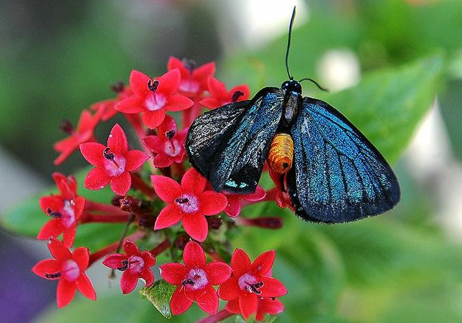 бабочка (675x472, 260Kb)