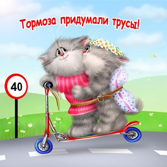 Прикольные истории о котах - Страница 2 73352287_5844jpg