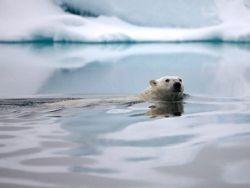Арктика - пресное озеро (250x188, 6Kb)