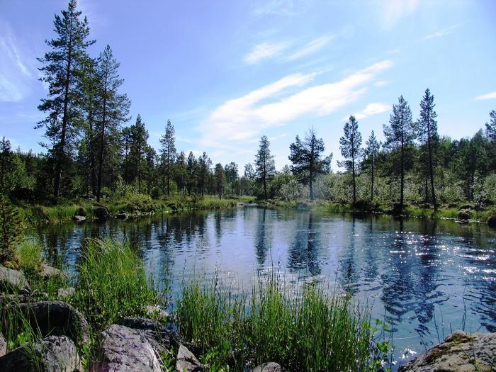 лес тайга рыбалка
