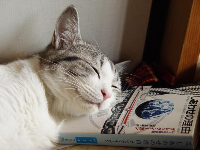 Что снится кошке