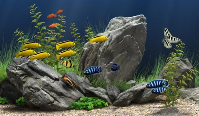 3424885_dream_aquarium_11870_rus__24_novyx_akvariuma_874895 (640x375, 46Kb)