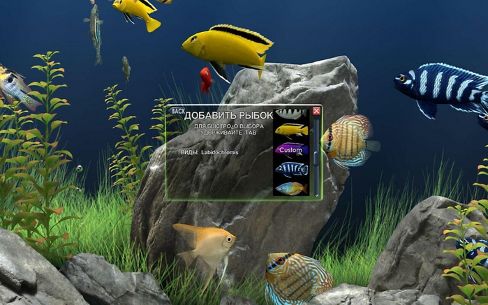 3424885_dream_aquarium_screensaver_124_x32_x64_tixaja_ustanovka_937936 (700x437, 255Kb)