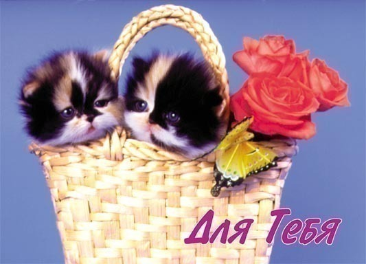 2 котенка в корзинке и розы (533x384, 45Kb)