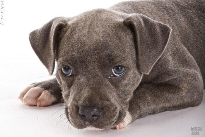 1276618238_cute_puppies_87 (700x467, 58Kb)