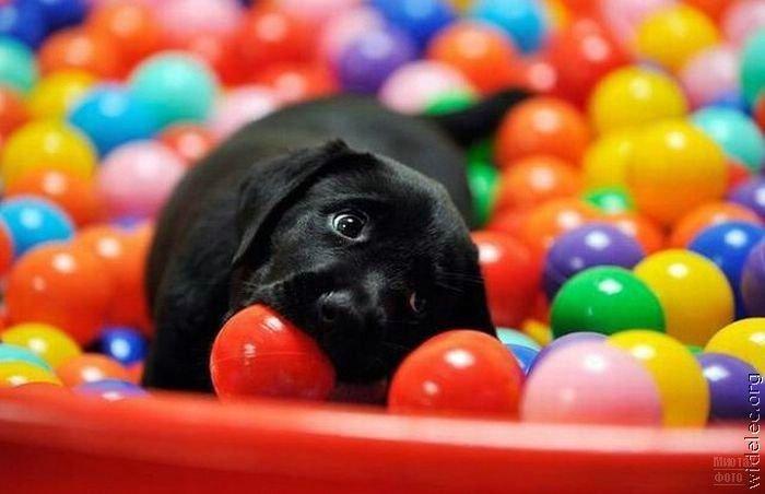 1276618241_cute_puppies_28 (700x452, 44Kb)