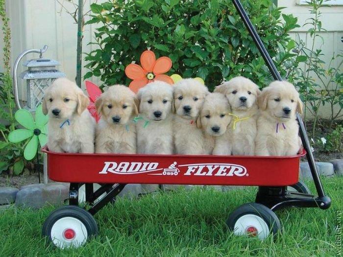 1276618243_cute_puppies_56 (700x525, 97Kb)