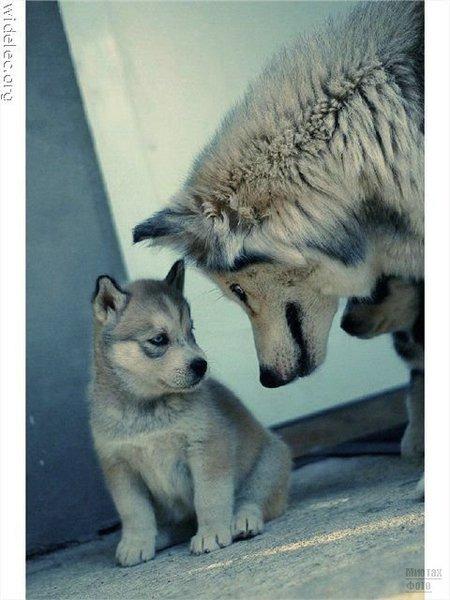 1276618248_cute_puppies_101 (450x600, 52Kb)
