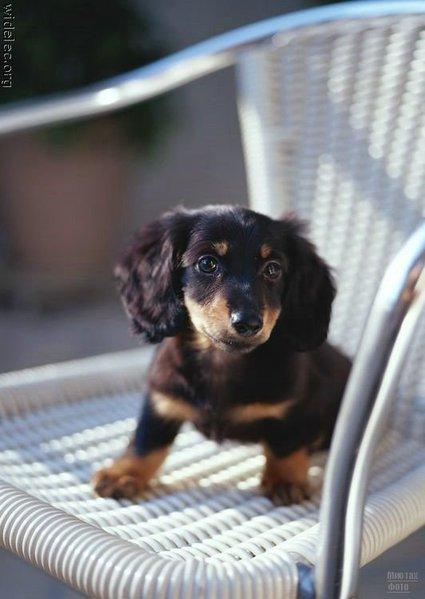 1276618253_cute_puppies_103 (425x600, 39Kb)