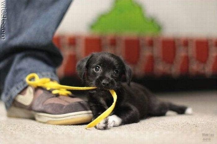 1276618256_cute_puppies_08 (700x465, 38Kb)