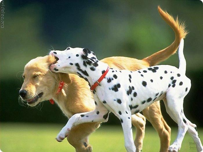 1276618258_cute_puppies_61 (700x525, 54Kb)