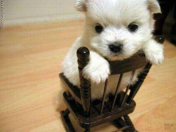 1276618262_cute_puppies_27 (700x526, 44Kb)