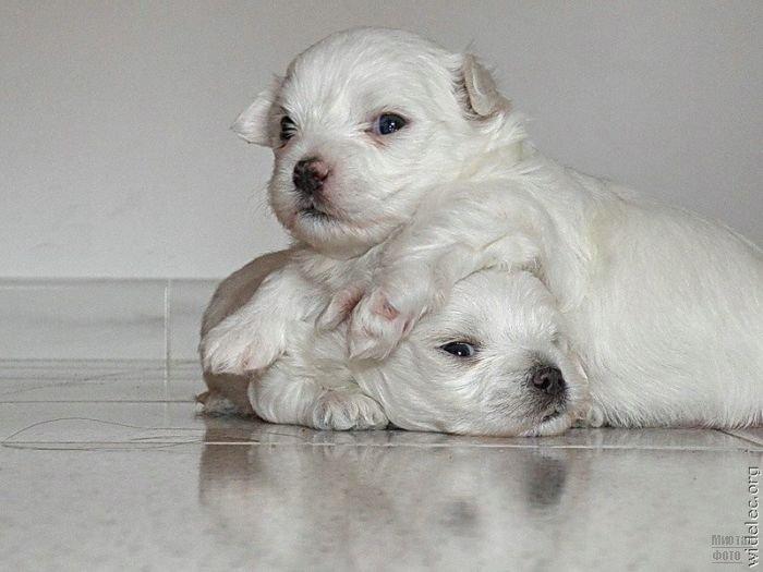 1276618268_cute_puppies_42 (700x525, 52Kb)
