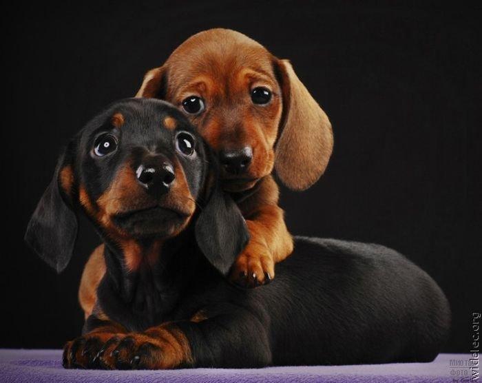 1276618268_cute_puppies_86 (700x556, 43Kb)