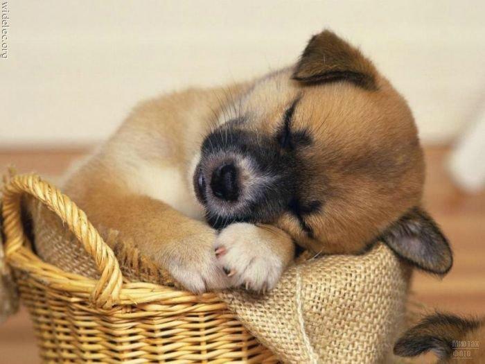 1276618272_cute_puppies_41 (700x525, 58Kb)
