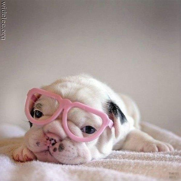 1276618278_cute_puppies_10 (599x600, 44Kb)
