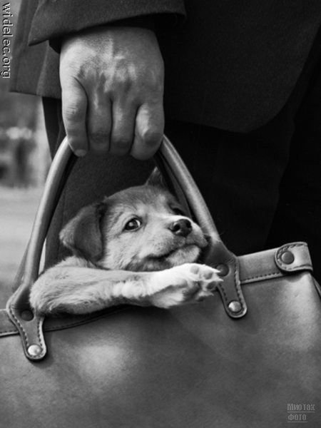 1276618280_cute_puppies_67 (450x600, 37Kb)