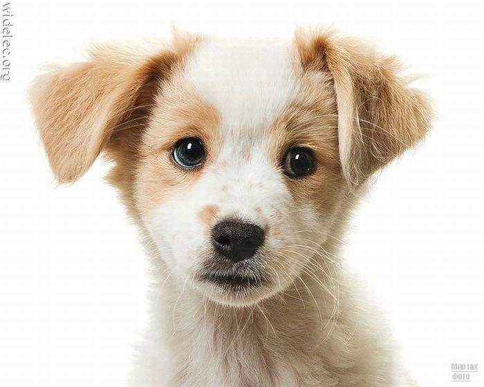 1276618282_cute_puppies_95 (700x560, 56Kb)