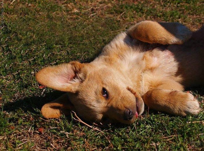1276618294_cute_puppies_45 (700x517, 104Kb)