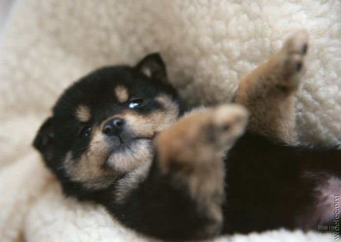 1276618296_cute_puppies_104 (700x497, 35Kb)