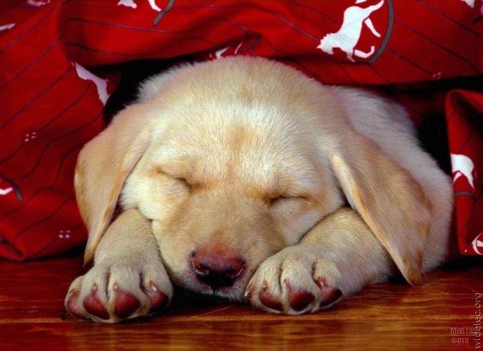 1276618306_cute_puppies_54 (700x510, 56Kb)