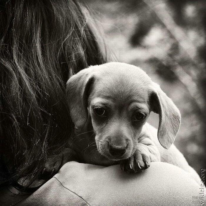 1276618314_cute_puppies_70 (700x700, 110Kb)