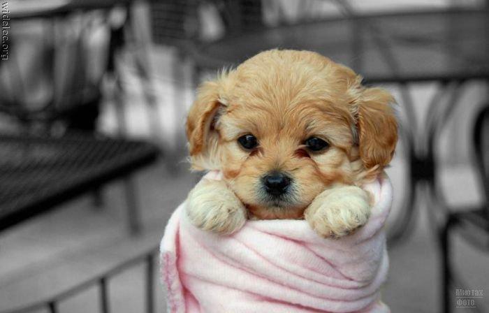 1276618315_cute_puppies_97 (700x448, 40Kb)