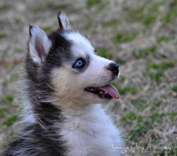 1276618316_cute_puppies_80 (700x620, 66Kb)
