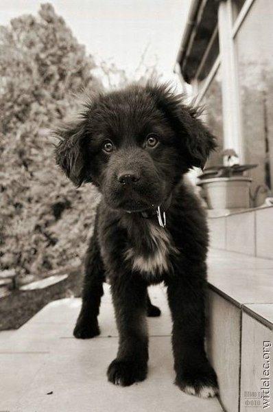 1276618319_cute_puppies_66 (398x600, 44Kb)