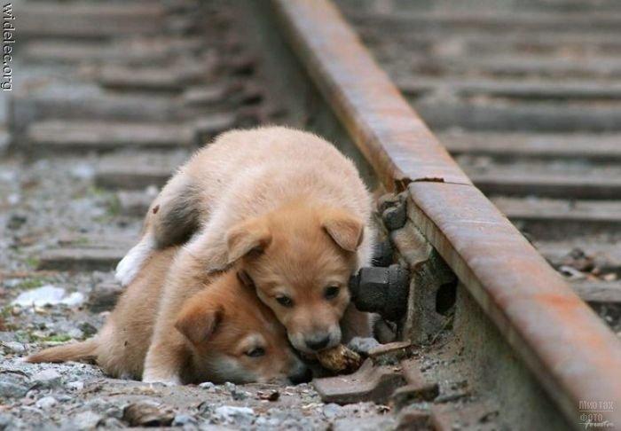 1276618327_cute_puppies_65 (700x486, 52Kb)